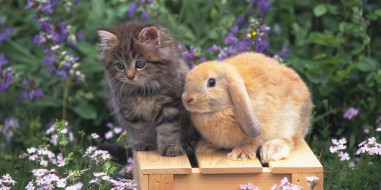 o-CAT-BUNNY-facebook